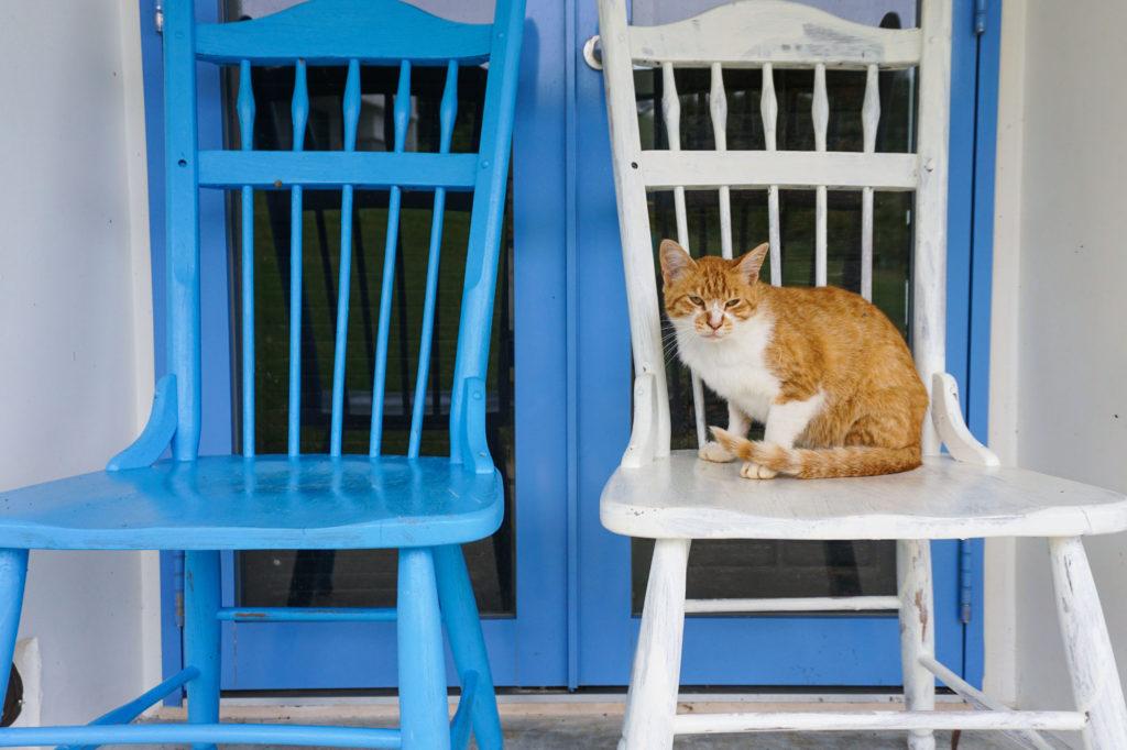 Котики в ленте комании