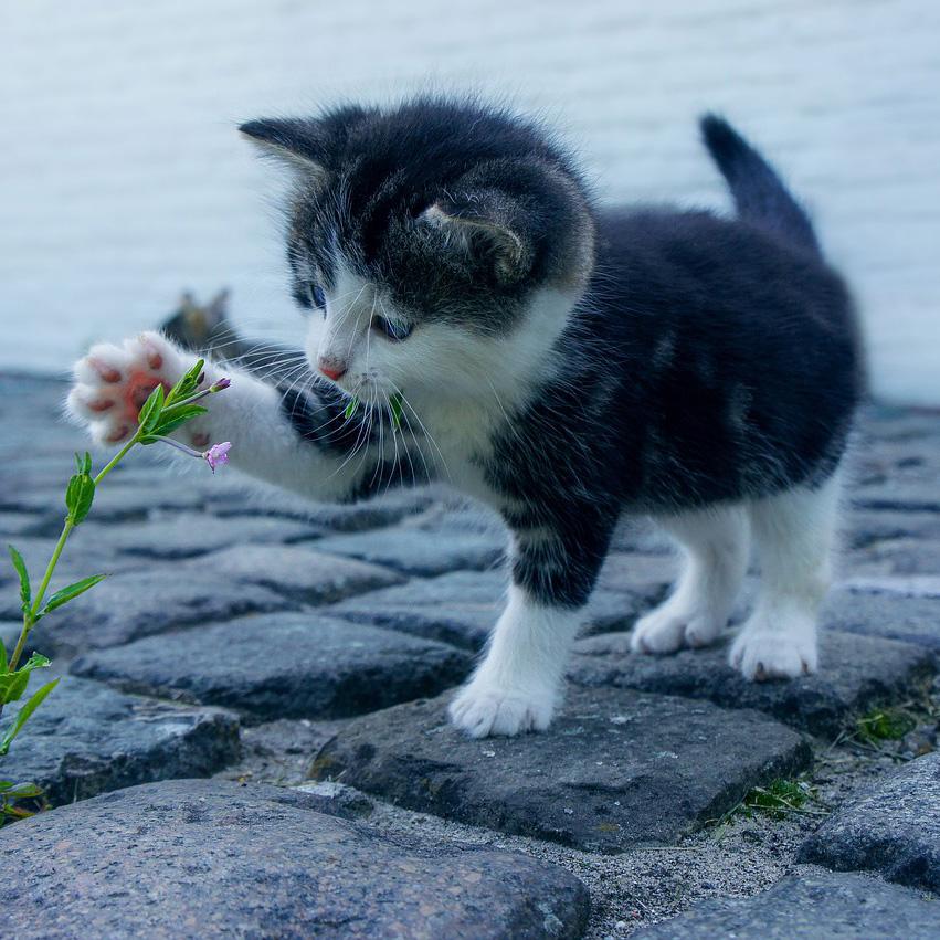 сколько стоит пристроить котенка или собачку